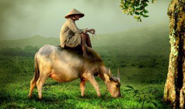 Ινδοκίνα Πανόραμα Βιετνάμ