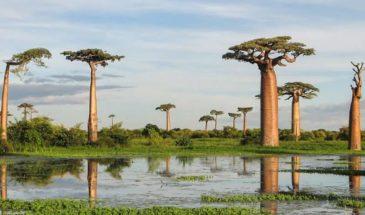 Πανόραμα Μαδαγασκάρης, Μαυρίκιος