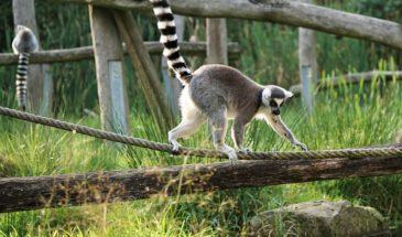 Πανόραμα Μαδαγασκάρης