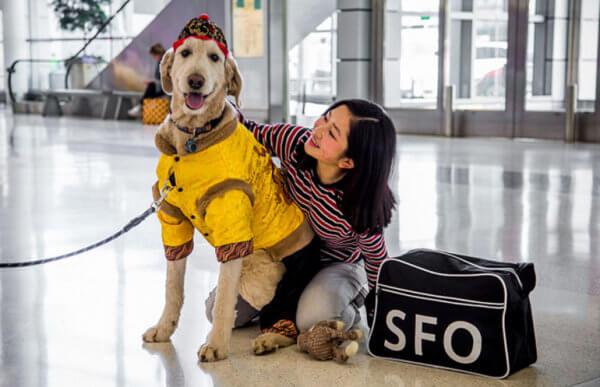 αεροδρόμιο ζώα επιβάτες 1