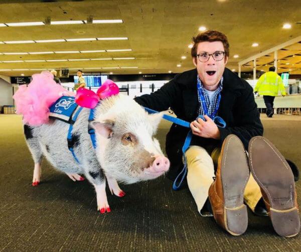 αεροδρόμιο ζώα επιβάτες 2