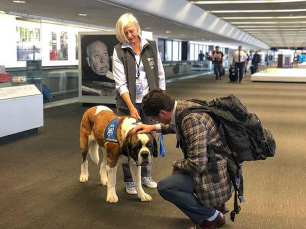 αεροδρόμιο ζώα επιβάτες 4