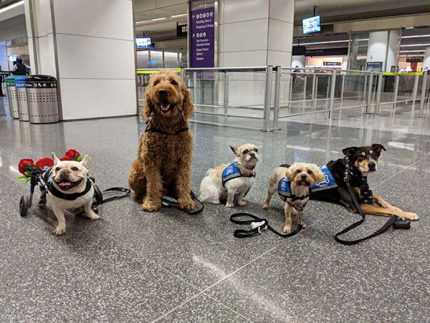 αεροδρόμιο ζώα επιβάτες 5
