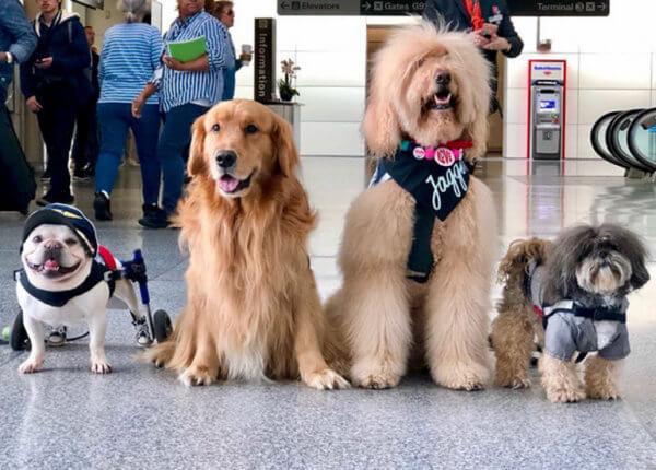 αεροδρόμιο ζώα επιβάτες